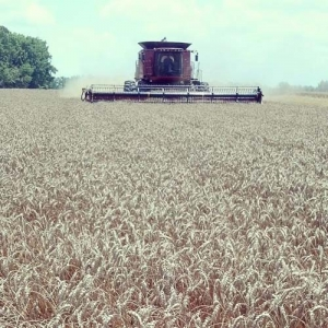 ag crop gallery - combining wheat - Carolina Precision