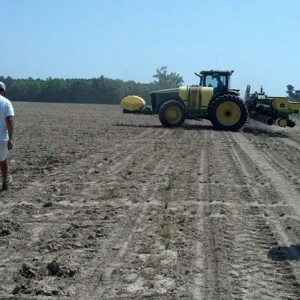 ag crop gallery - cotton test plot - Carolina Precision