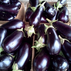 ag crop gallery - eggplant  - Carolina Precision