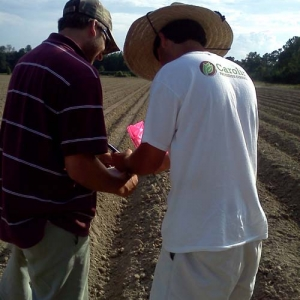 ag crop gallery - test plots - Carolina Precision